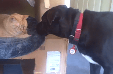 YouTube - Confused Dog