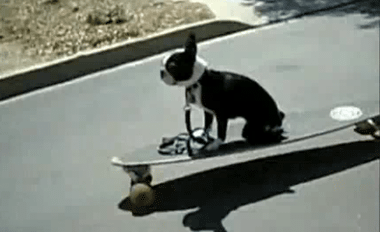 YouTube - Skateboarding Dog Fail