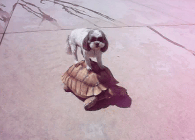 YouTube - Cute Dog Rides Turtle