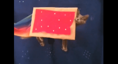 YouTube - The Poptart Cat Live 'nyan nyan'