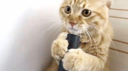 掃除機に吸引される空気をペロペロするのが大好きなネコの映像