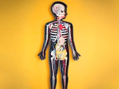 ペーパークラフトで人体の仕組みを説明する秀逸なストップモーションムービー