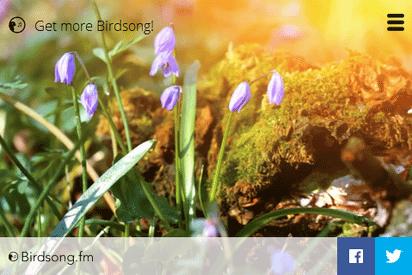 爽やかな鳥のさえずりを聴かせてくれるシンプルなWebラジオ『Birdsong.fm』